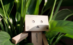Danbo In The Jungle