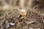 Danbo March