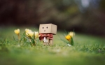 Just Danbo