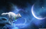 magic_white_wolf-wallpaper-2560x1600