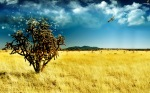 the-magic-tree