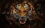 Wallpaper Tiger