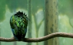 bird-on-a-branch