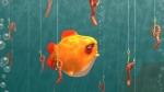 Boring Fish