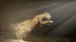 Dust Cheetah