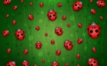 full-of-lady-bugs