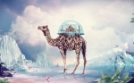 taj-mahal-on-camel-1920x1200-wide-wallpapers-net